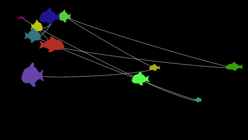 Screenshot: Eleven differently colored and differently sized fish connected by a white line. Black background.